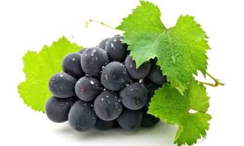 Заболевание листьев винограда