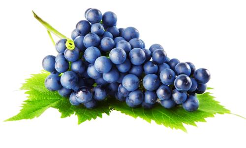 Заболевание виноградных культур