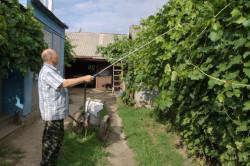 Обязательные некорневые подкормки винограда