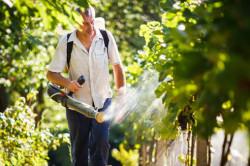 Опрыскивание винограда для лечения и профилактики болезней