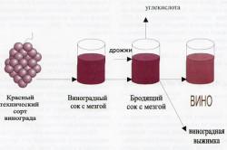 Схема трансформации винограда в вино