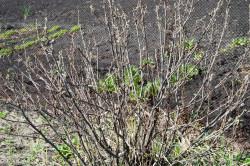 Осенние кусты винограда