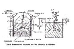 Схема подготовки ямы под посадку винограда