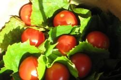Томаты в листьях винограда