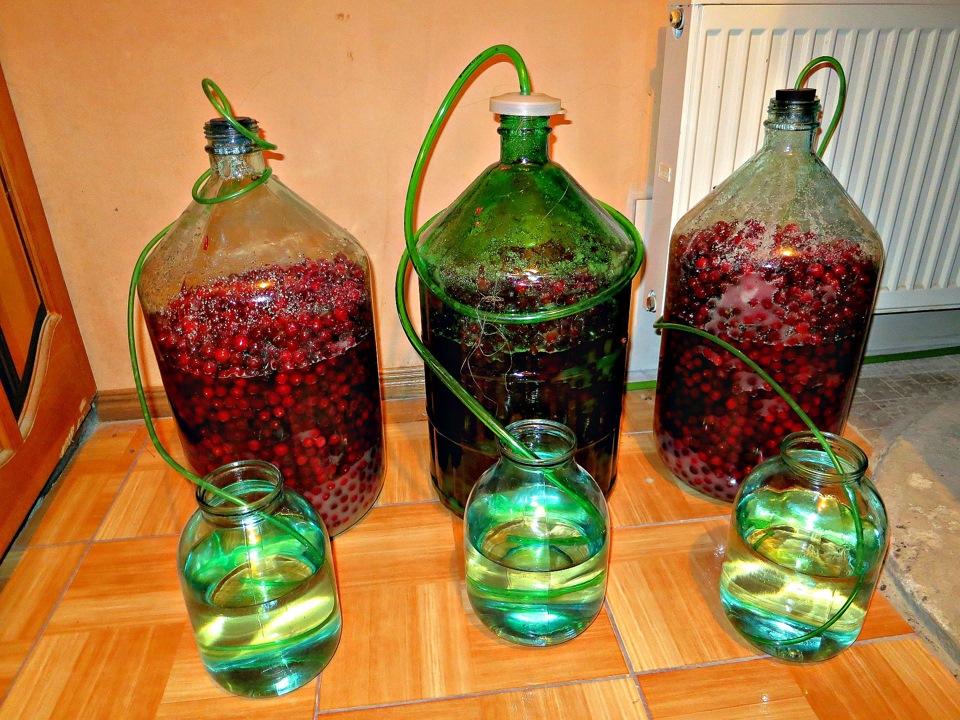 Молодое виноградное вино в домашних условиях