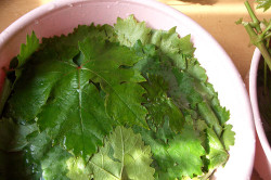 Мытье листьев