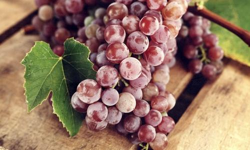 Проблема посадок винограда в первом году