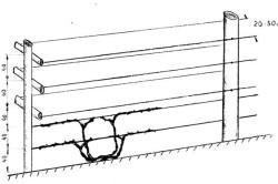 Схема одноплоскостной шпалеры