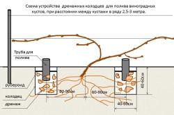 Схема устройства дренажных колодцев для полива винограда