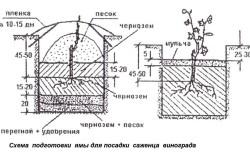 Схема ямы для посадки винограда